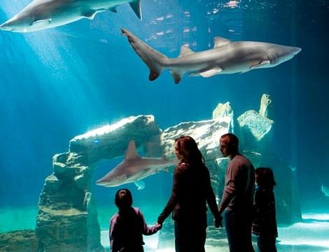L'Acquario è il maggiore richiamo per il turismo che passa dalla nostra città