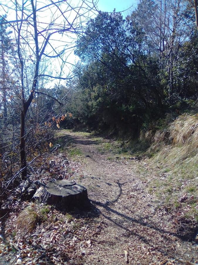 Arbusti divelti e rovesciati sui sentieri. Il Parco di Portofino abbandonato a sè stesso