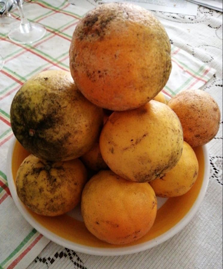 Le arance del giardino della vicina di casa una dieta ricca di vitamine